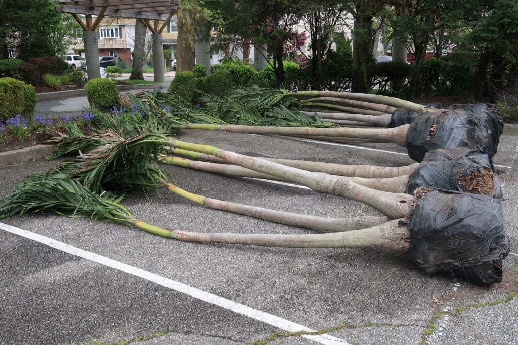 palm tree delivery at The Crescent Beach Club