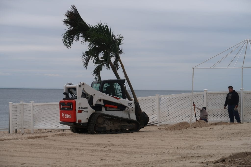 palm tree installation at The Crescent Beach Club