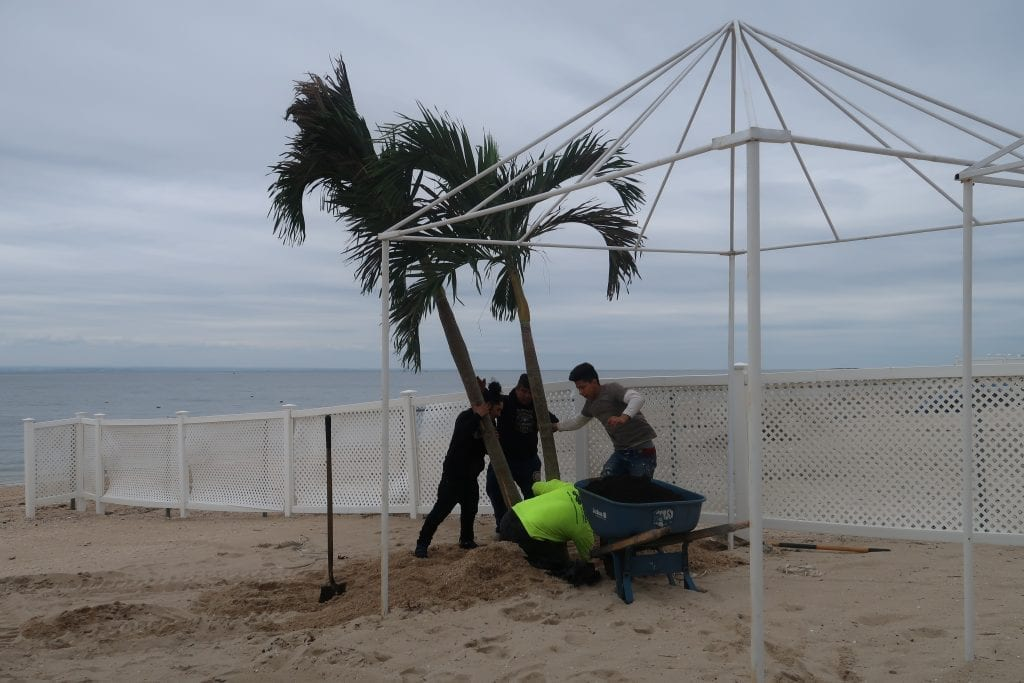Installing tropical palm trees